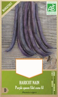 Graines de haricot Purple Queen