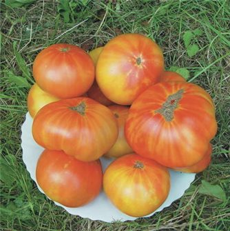 Graines de tomate ananas